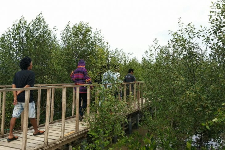 Wilayah pesisir Karawang jadi ekowisata mangrove