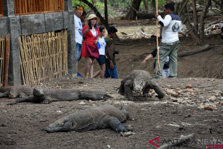 Guide association suggests limitation of number of tourists to Komodo Island