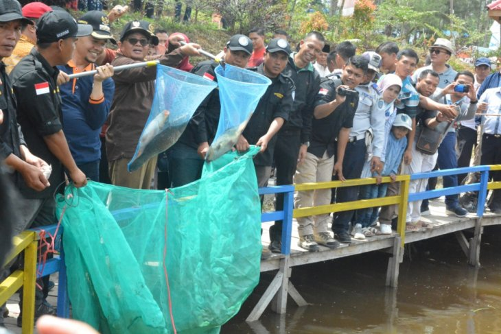 Gubernur Jambi panen ikan semah di kolam BUMDesa