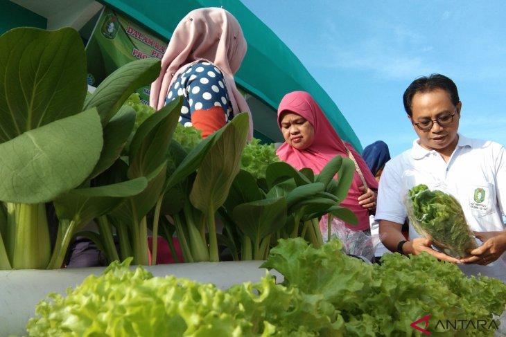 Hidroponik solusi pertanian bagi kalangan milenial di Kalbar