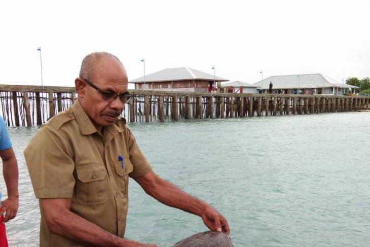 BKSDA Maluku lepasliarkan empat ekor penyu sisik
