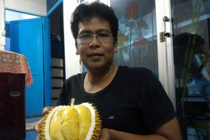 Durian Bentara jadi komoditas andalan Bengkulu