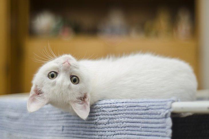 Hiiih, Bunuh kucing di mesin cuci pria Malaysia dibui 34 bulan