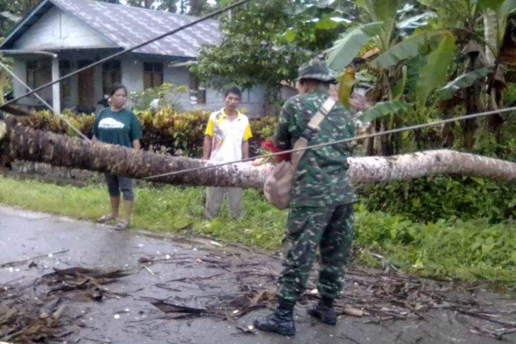 Pohon tumbang ganggu jaringan listrik di Nias Utara