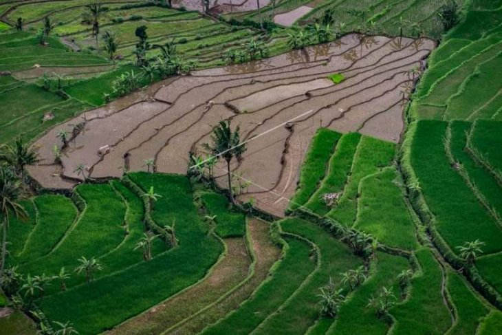 Anggaran sektor pertanian