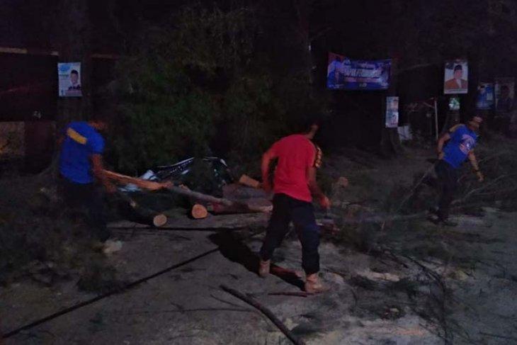 Angin kencang tumbangkan pohon cemara di Aceh Besar