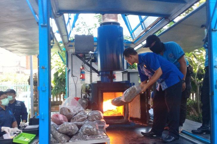 BNN Bali musnahkan 21 kilogram ganja (video)