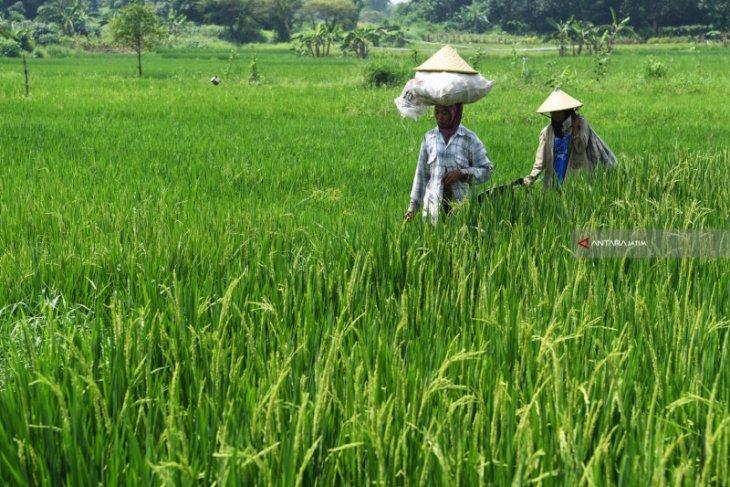 DPRD-Pemkab Situbondo bahas Raperda Cadangan Pangan