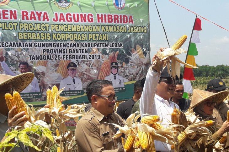 Petani Jagung Banten Butuh Akses Permodalan