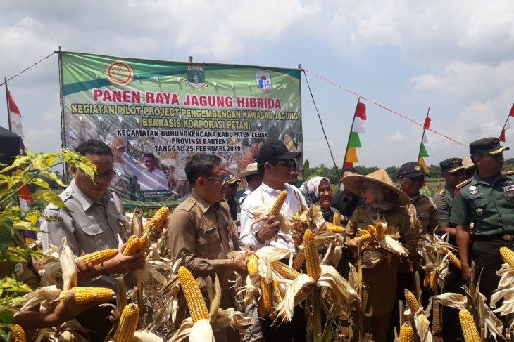 Kementerian Pertanian Dorong Pengembangan Peternakan Di Kawasan Jagung Banten