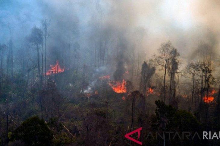 Gawat, karhutla Riau terus meluas
