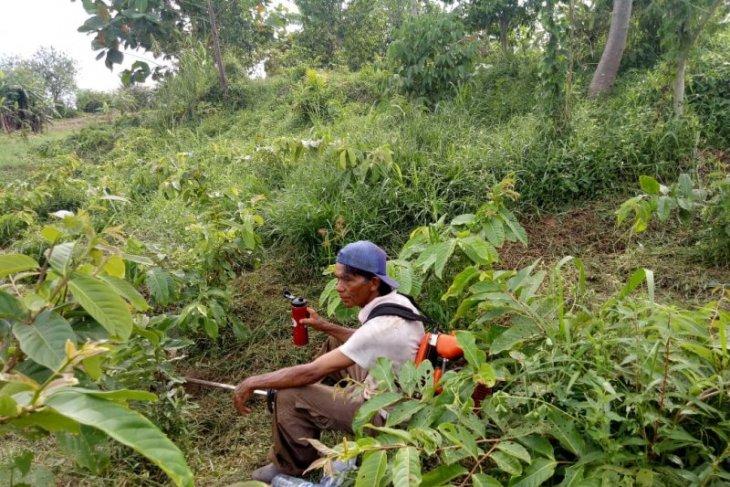 GMSS-SKM tanam 9.000 berbagai jenis pohon