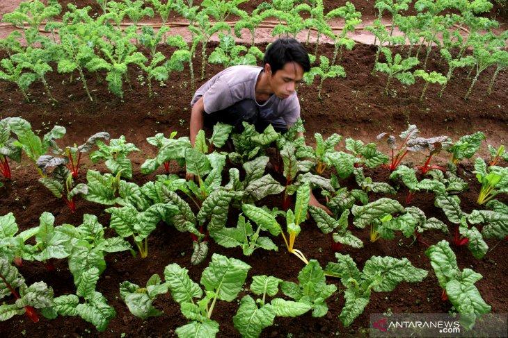 DPRD Bali buat perda sistem pertanian organik.