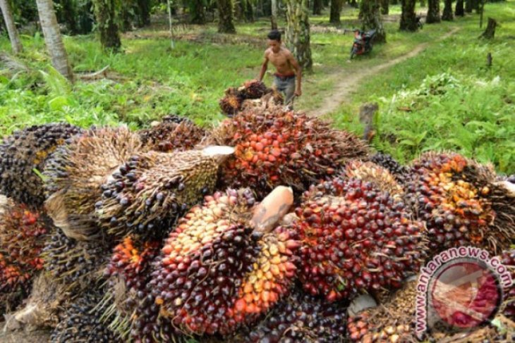 House calls for special law on oil palm