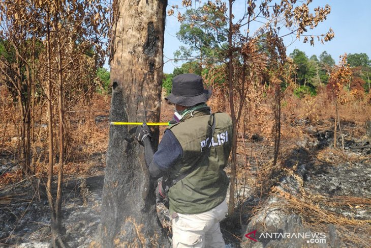 Bengkalis BPBD workers, firefighters put out bush and forest fires