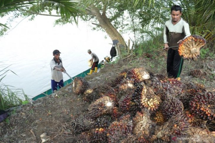 Jambi notches hike in CPO price to Rp6,158 per kilogram