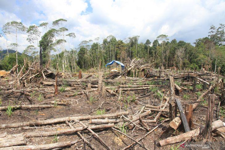 IAGI Aceh usulkan tambang emas ilegal dijadikan usaha tambang rakyat