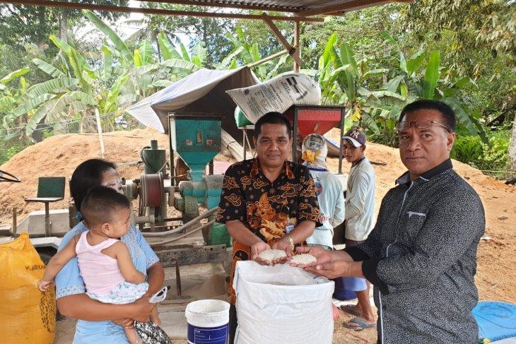 Bulog beli beras petani Pulau Buru