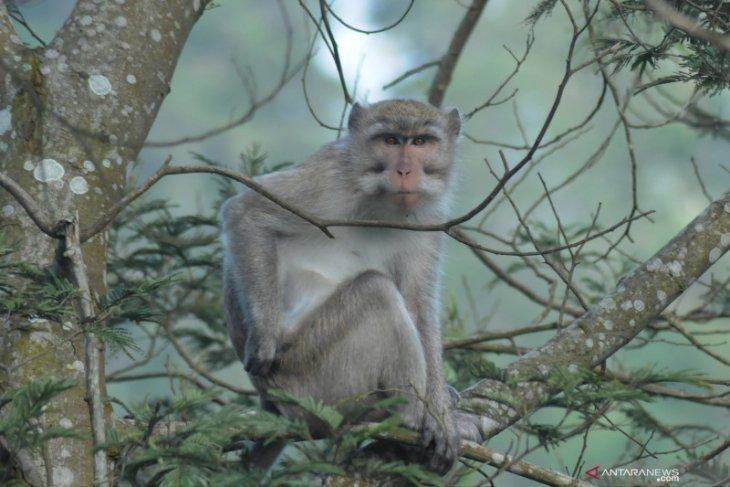 Bocah di Bogor jalani perawatan intensif karena diserang monyet
