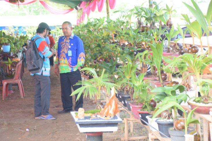 Perkumpulan Bonsai Kelapa ingin ciptakan rekor