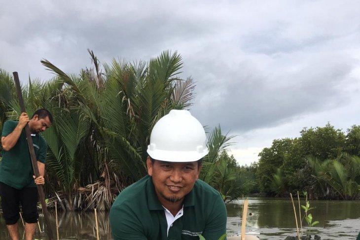 Perbaiki ekosistem pascatsunami, PT PLB tanam mangrove