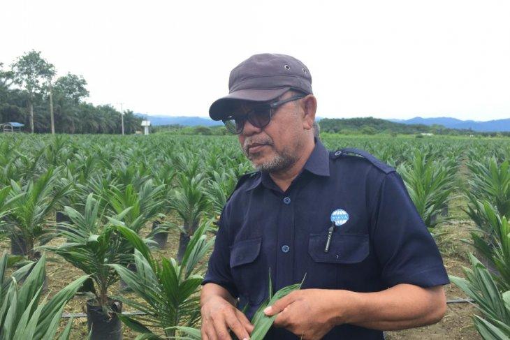 Perusahaan sawit UWTL replanting 350 ha pada tahun ini