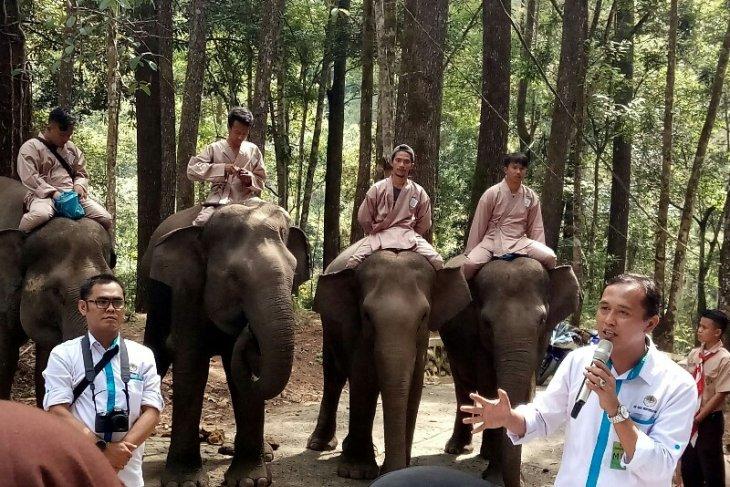 Gajah di ANECC Simalungun bisa berhitung dan main sepak bola