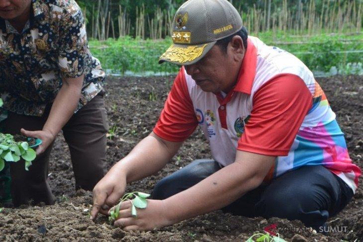 Wali Kota padangsidimpuan segera keluarkan perwal perkuat sektor pertanian