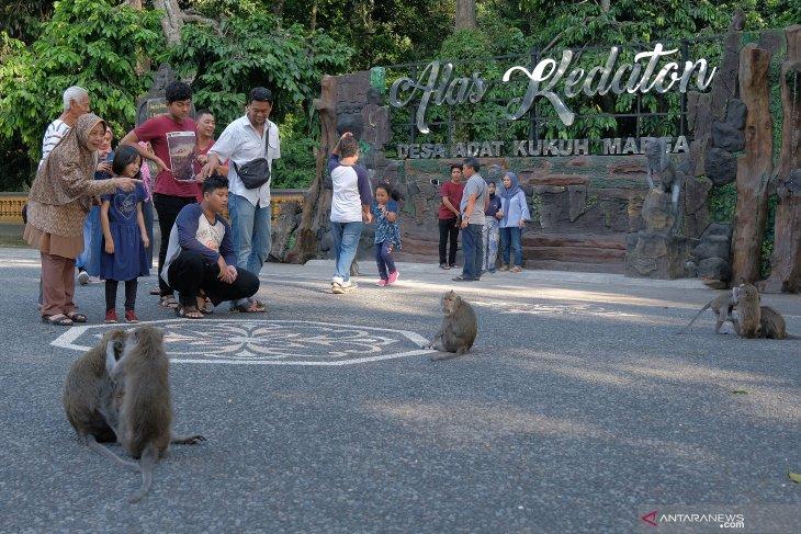 Lebaran Kunjungan Wisatawan Ke Hutan Monyet Alas Kedaton