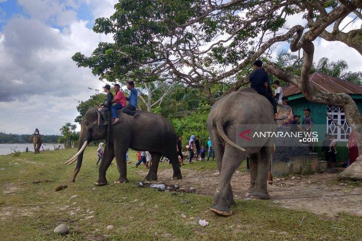 Bentang Seblat habitat terakhir gajah di Bengkulu