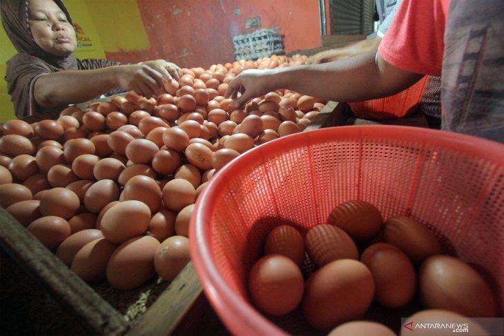 Harga telur ayam ras di Piru bertahan