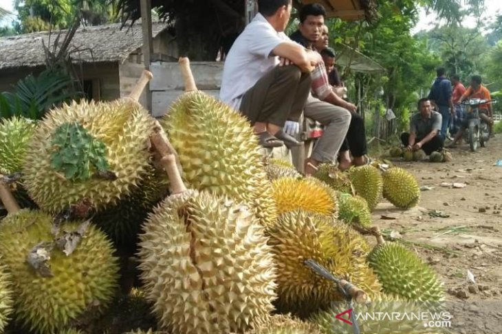 Aceh Jaya penghasil durian manis