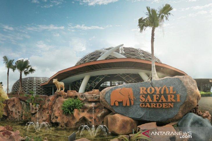 Royal Safari Garden tawarkan sensasi memberikan makan Buaya
