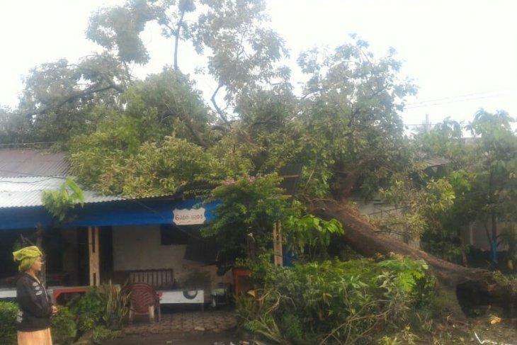 Pohon tumbang timpa rumah warga di Simalungun