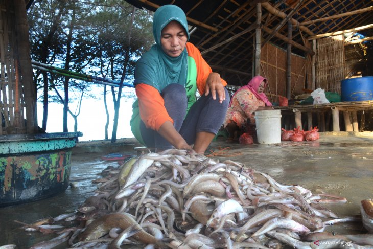 Produksi ikan turun