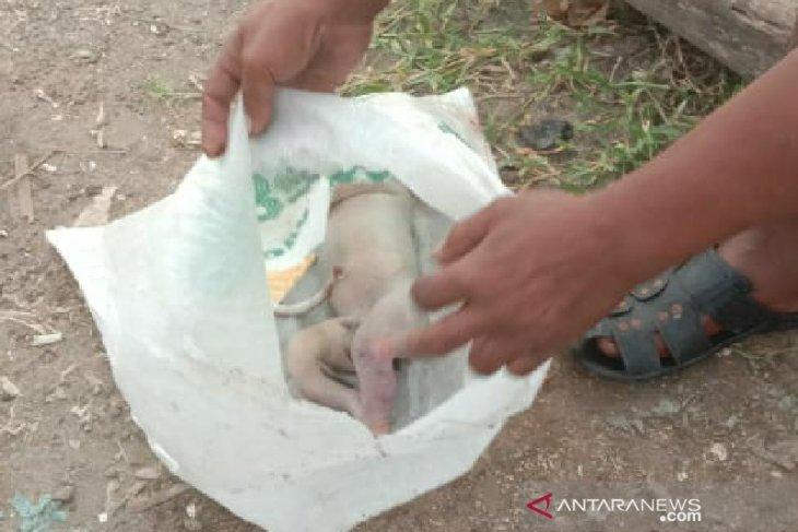 Sesosok mayat bayi ditemukan mengambang di Sungai Deli