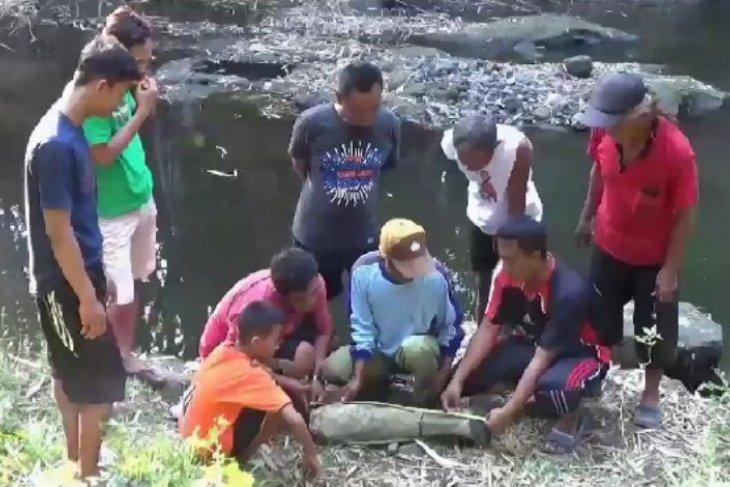 Warga Ngawi Jatim temukan fosil tulang paha gajah purba