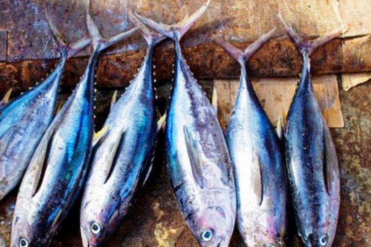 Pabrik pengolahan ikan tingkatkan iklim investasi di Ambon