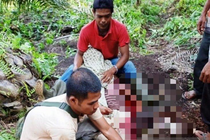 Warga Nagan Raya ditemukan tewas bersimbah darah di kebun