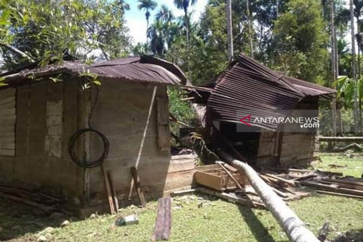 Houses in Aceh destroyed after 12 elephants go on rampage