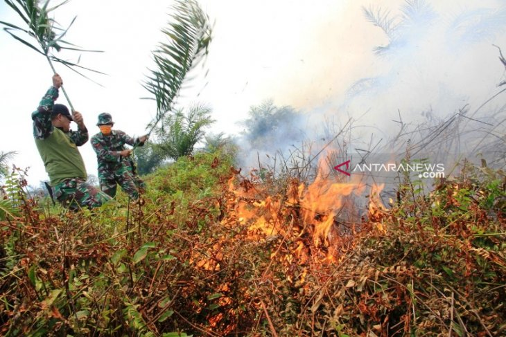 Aceh's 20-hectare peatland engulfed by fire amid dry season
