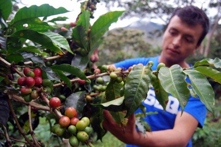 Perwakilan petani kopi seluruh dunia bertemu di Brazil