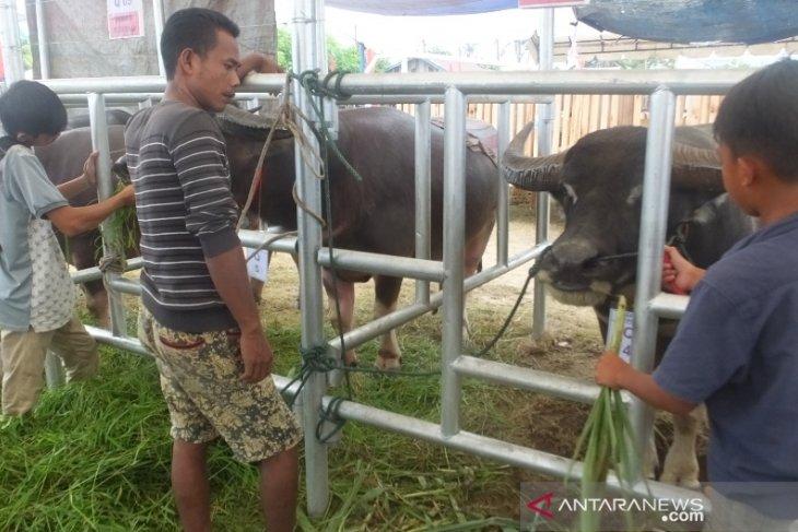Pedagang Abdya siapkan 173 ekor kerbau untuk meugang Idul Adha