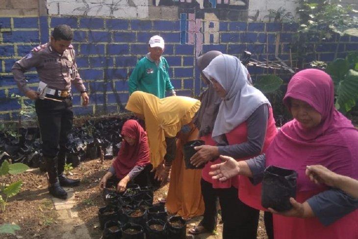 Warga Tangerang tanam 1.000 benih cabe antisipasi kenaikan harga
