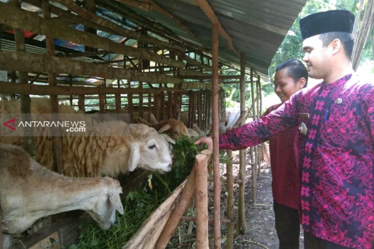 Pemuda Tapsel kembangkan kewirausahaan ternak kambing