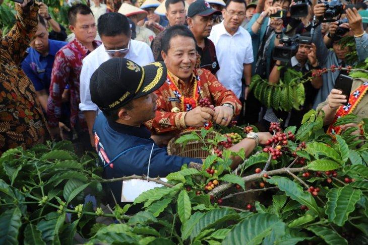 Harga biji kopi Lampung turun jadi Rp18 ribu/kilogram