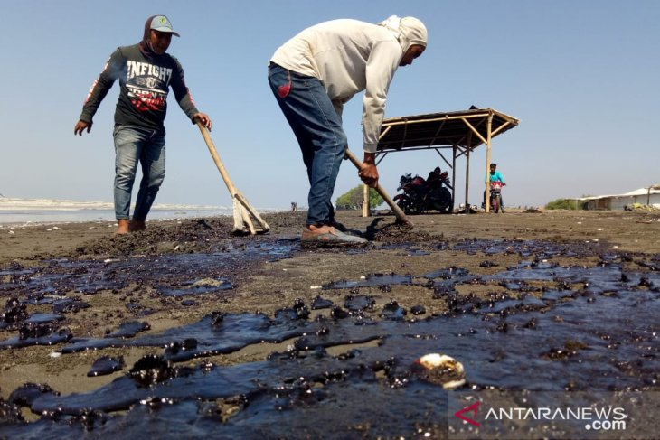 Karawang's fishermen involved in cleaning up oil-spill affected areas