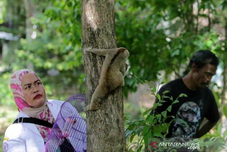 BKSDA Aceh lepasliarkan tiga satwa  dilindungi