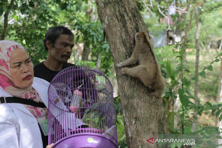BKSDA Aceh lepasliar dua satwa dilindungi