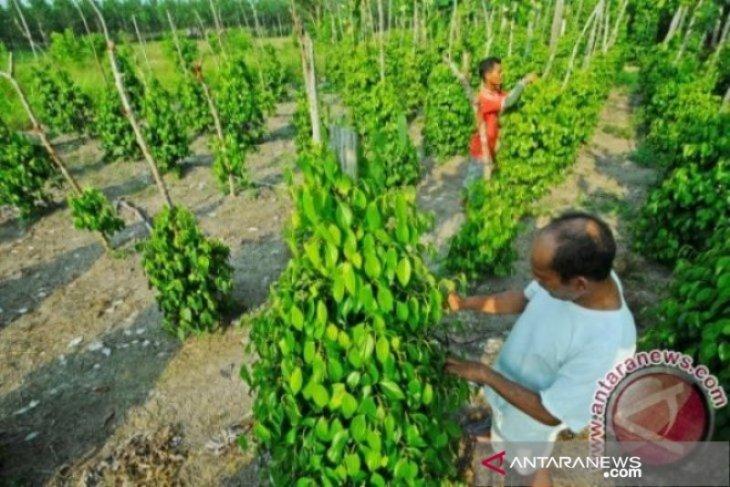 BPS mencatat nilai tukar petani Bangka Belitung turun